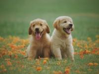 Собаки и их положительное влияние на нашу жизнь
